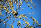 Frühlingsvogel