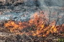 Feuer trifft Erde