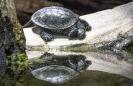Schildkröte²