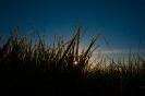Graslandschaft bei Sonnenaufgang