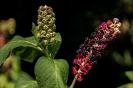 Beerenblume