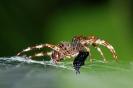 Spinnenmalzeit