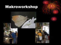 2007 - Makroworkshop